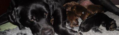 De pups zijn alweer 2 weken oud!